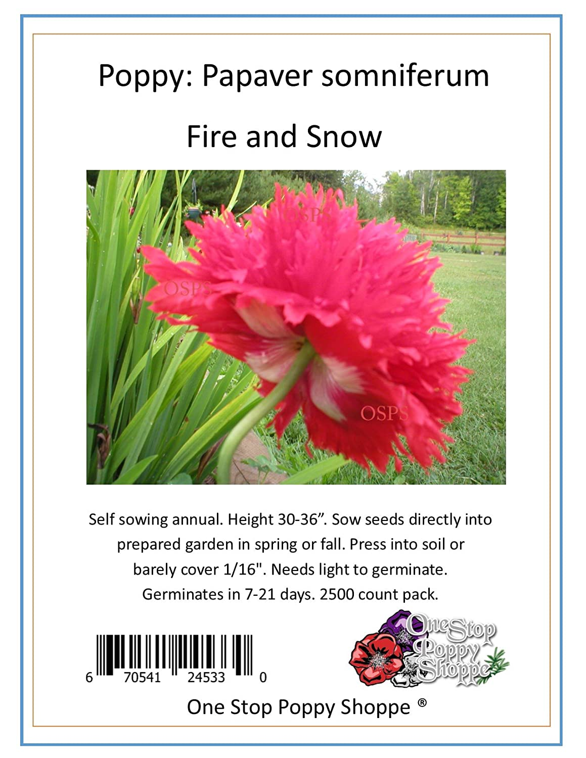 70 Off 2500 Poppy Flower Seeds Fire N Snow Papaver