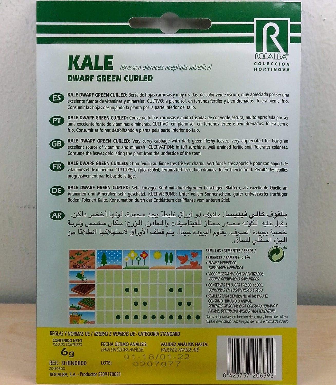 AGROBITS Kale Green Cur Berza (6 gr / 1.500 Seas) - Col Rizada ...