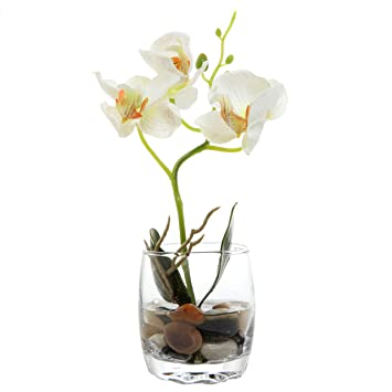 Amazon Mygift Mini Synthetic Silk Artificial Phalaenopsis
