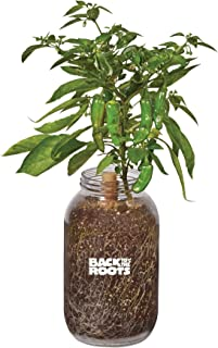 product image for Back to the Roots Self-Watering Shishito Planter, Grow Organic Shishito Peppers Year Round, Windowsill Grow Kit, Top Gardening Gift, Holiday Gift, & Unique Gift