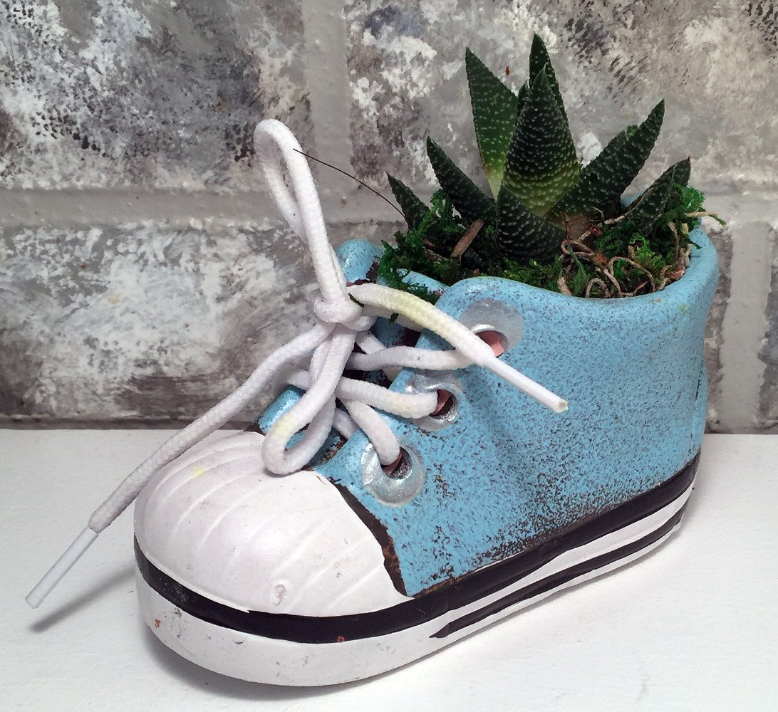 3b48e56432b9f Amazon.com : Baby Shoe Planter with Live Plant - 5 x 2 x 4.75 ...