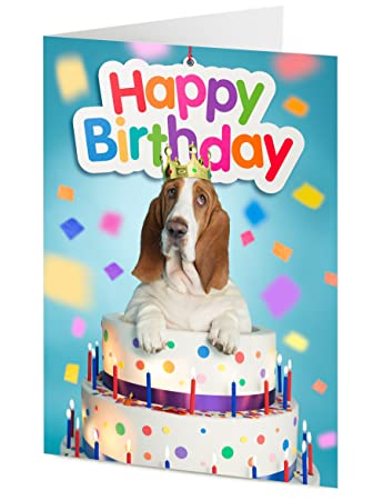 Basset Hound Emerges From Giant Birthday Cake