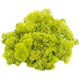 Reindeer Moss Preserved   Lime Green Moss   For Fairy Gardens, Terrariums, or any Craft or Floral Project   Nautical Crush Trading TM (2 Ounces)