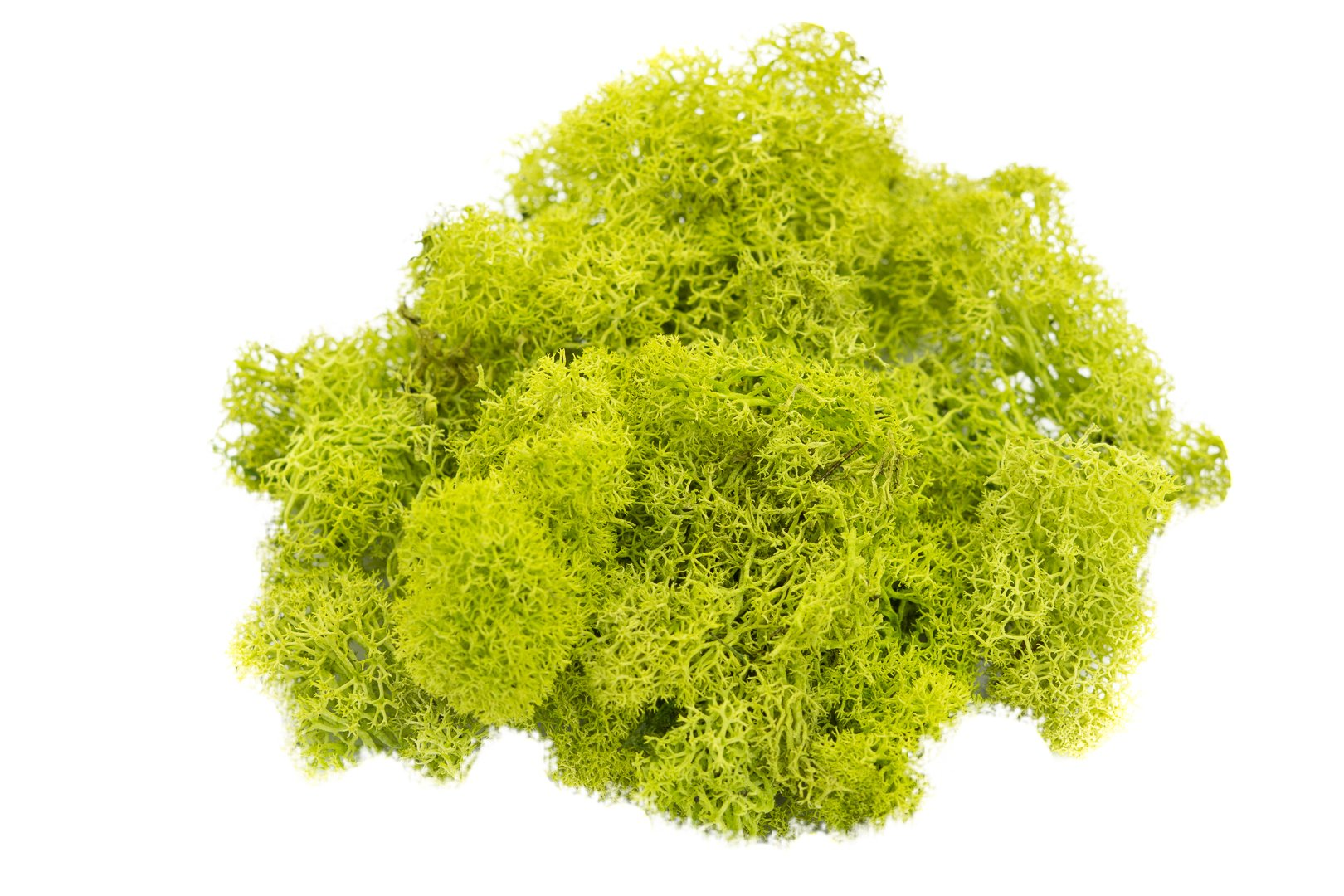 Reindeer Moss Preserved | Lime Green Moss -4 oz | For Fairy Gardens, Terrariums, or any Craft or Floral Project | Nautical Crush Trading TM (4 Ounces)