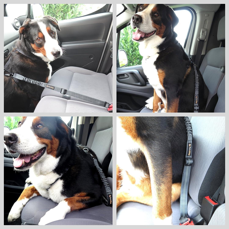 Ruck-D/ämpfung Auto-Gurt-Adapter Sicherheits-Gurt inkl Hunde-Anschnall-Gurt mit mehrfacher Sicherung durch Profi-Karabiner Pets/'nDogs Chrom-Schlie/ßhaken