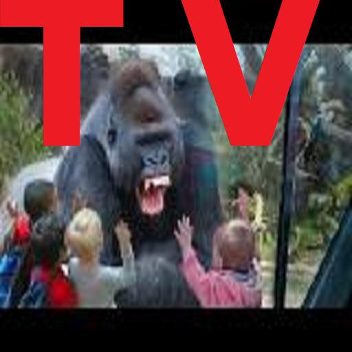 Tv Sport - 9