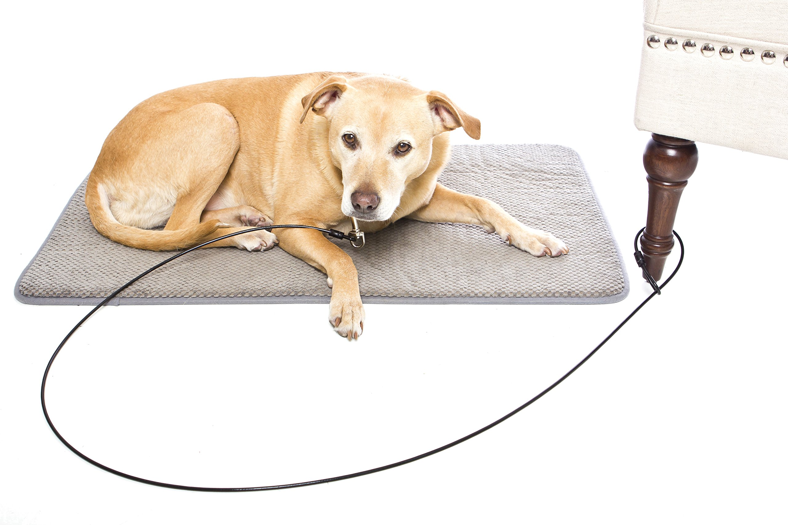 Last Leash Chew-Proof Training Tie Down - Tether Restraint for Dogs & Teething Puppies (6 feet) by Last Leash (Image #4)