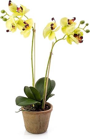 Fiori Gialli Tondi.Orchidea Farfalla Artificiale Mina Vaso In Terracotta Tondo