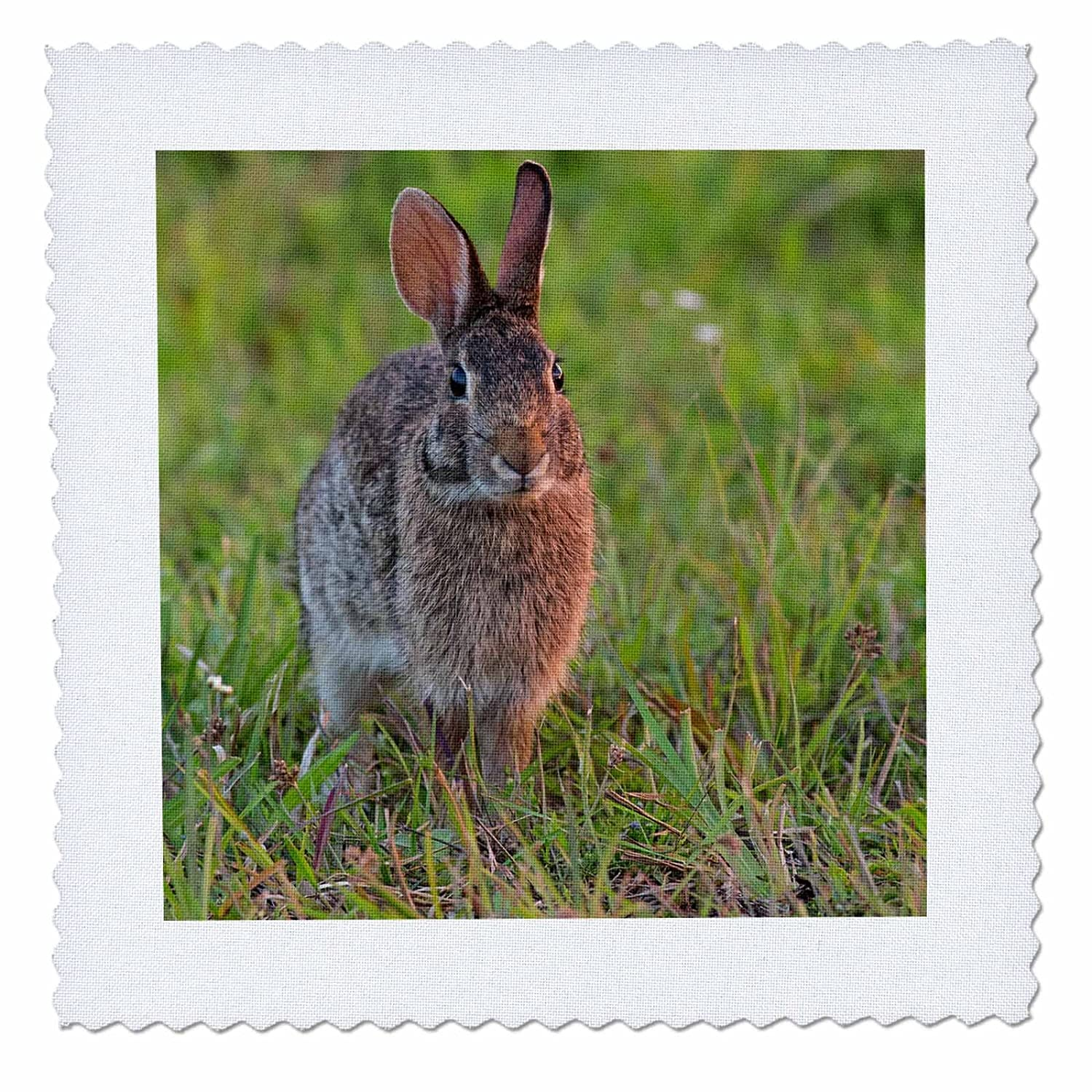 3D Rose Eastern Cottontail Kissimmee Preserve State Park Florida Square Quilt 8 x 8