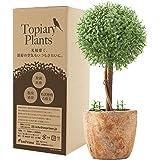 【Amazon.co.jp限定】光触媒植物 人工観葉植物 フェイクグリーン トピアリー ボール 光触媒 高さ23cm