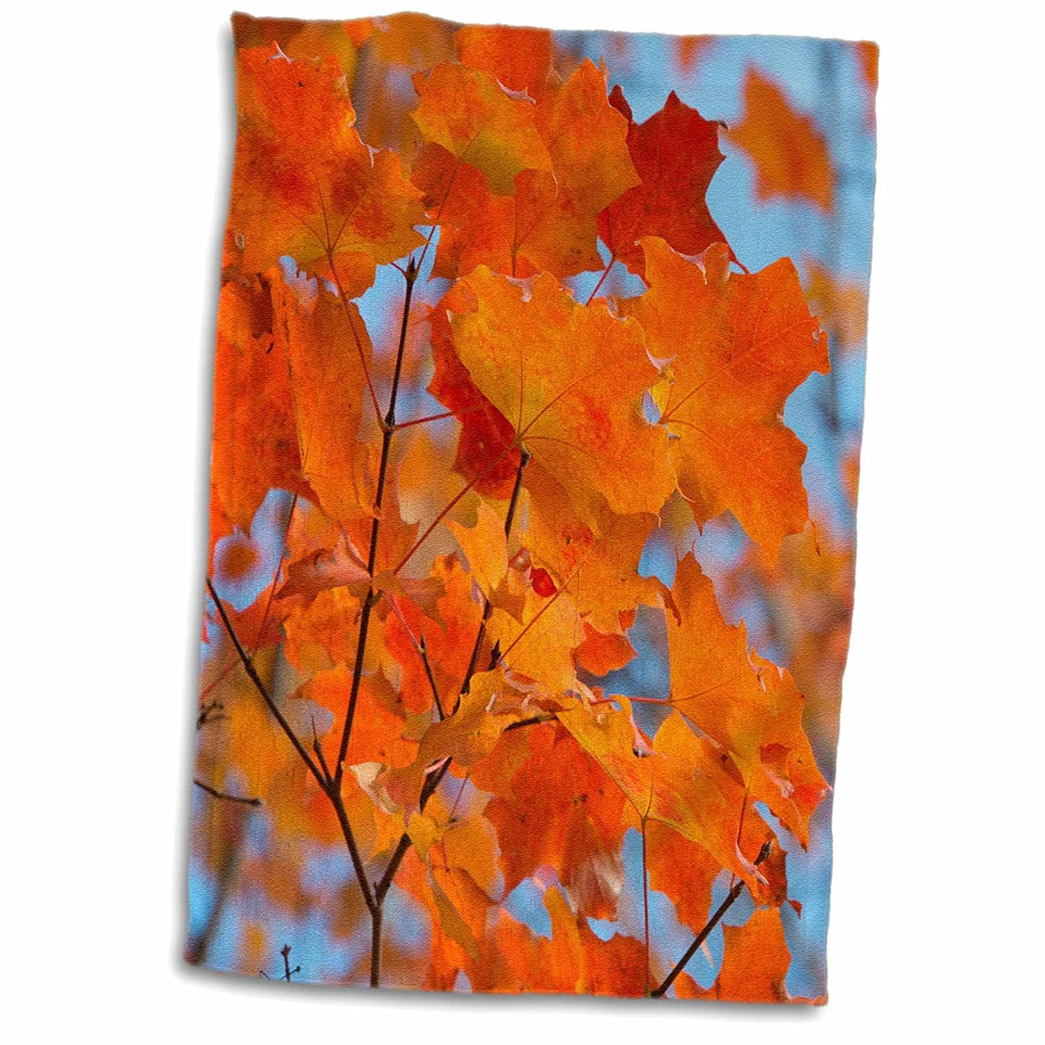 3D Rose Canada Quebec City 15 x 22 Colorful Orange Fall Maple Tree Leaves TWL/_187670/_1 Towel