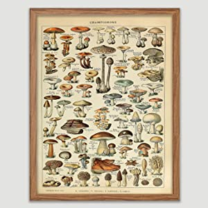 Antique Mushroom Book Plate Poster Vintage Botanical Print Mushroom Home Decor Botanical Wall Art Champignons Wall Decor Vintage Antique Nature Kitchen Decor French Mushroom Artworks