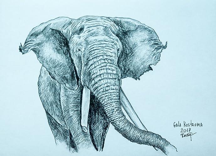 Amazoncom An Elephant Animal Original Pencil Drawing Handmade