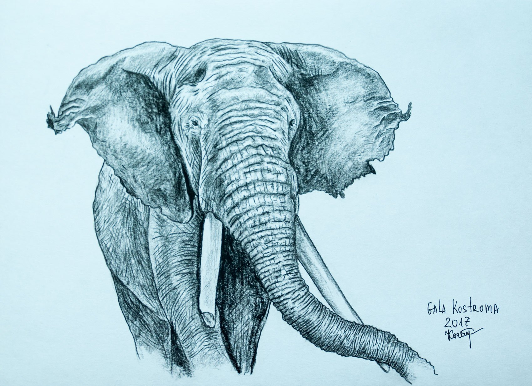 An Elephant animal original pencil drawing