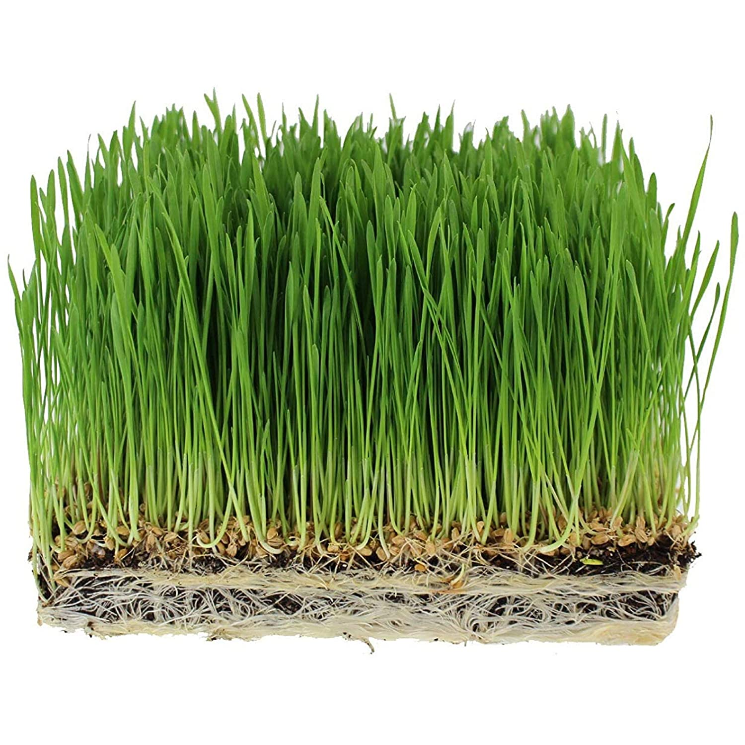 Handy Pantry Organic Wheatgrass Seeds - For Wheat Grass, Cat Grass, Food Storage & More - Hard Red Wheat (1/2 Pound)