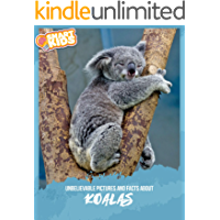 Unbelievable Pictures and Facts About Koalas