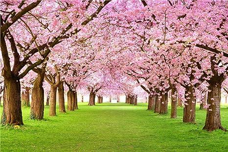 Rosa Cherry Blossom árboles boda flores fondos fotografía impresa ...