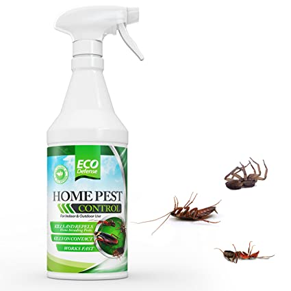 best spider killer to kill spiders in home