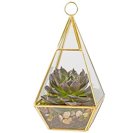 Amazon Com Deco Glass Terrarium Succulent Air Plant Pyramid