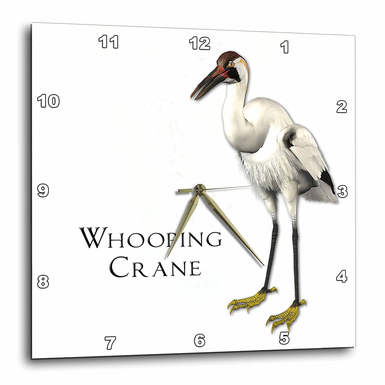 3dRose 3D Rose Whooping Crane Shorebird-Wall Clock 15-inch DPP/_51601/_3