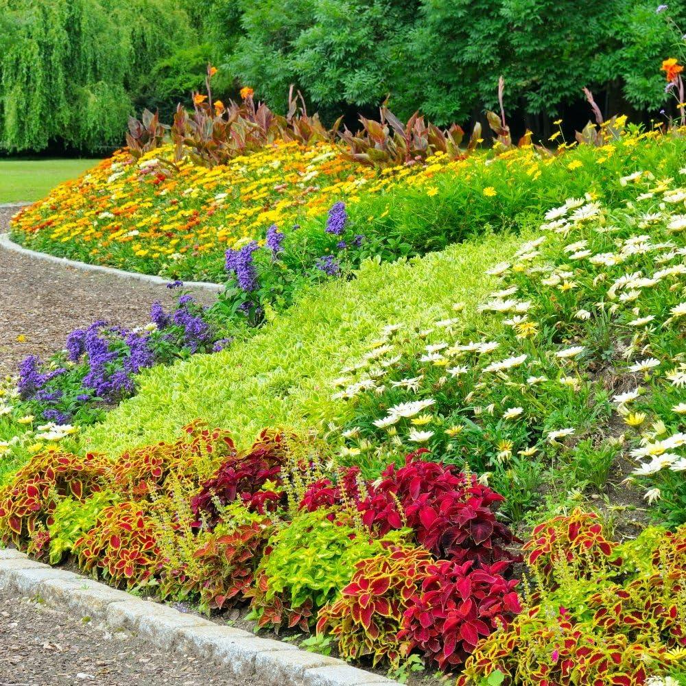 Semillas anuales de la mezcla de la planta de rocalla: Amazon.es: Jardín