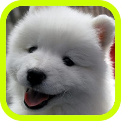Cute Puppies Adorable Puppy Pics And Wallpaper Pictures Best Collection Of Free Pics With 3d Little Dogs In The World A Great Pro Games App For Kids Adults Amazon Com Au Appstore For
