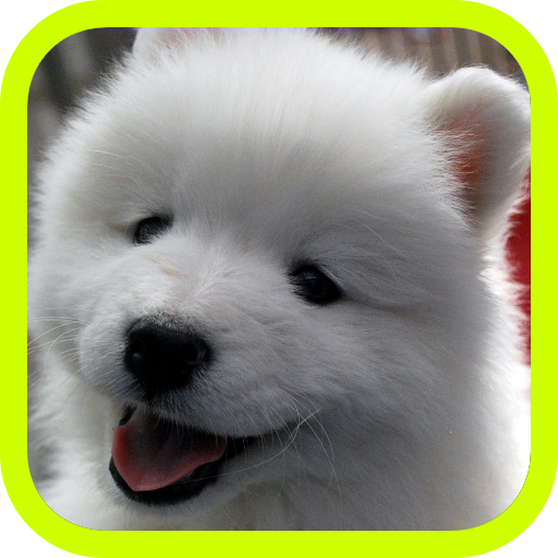 Cute Puppies!!! Adorable Puppy Pics and Wallpaper Pictures! Best Collection of FREE Pics with 3d Little Dogs in the World! A Great Pro Games App for Kids & Adults! ()
