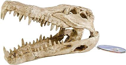 Amazon Com Pen Plax Rr1065 Crocodile Skull Animal Resin Ornament