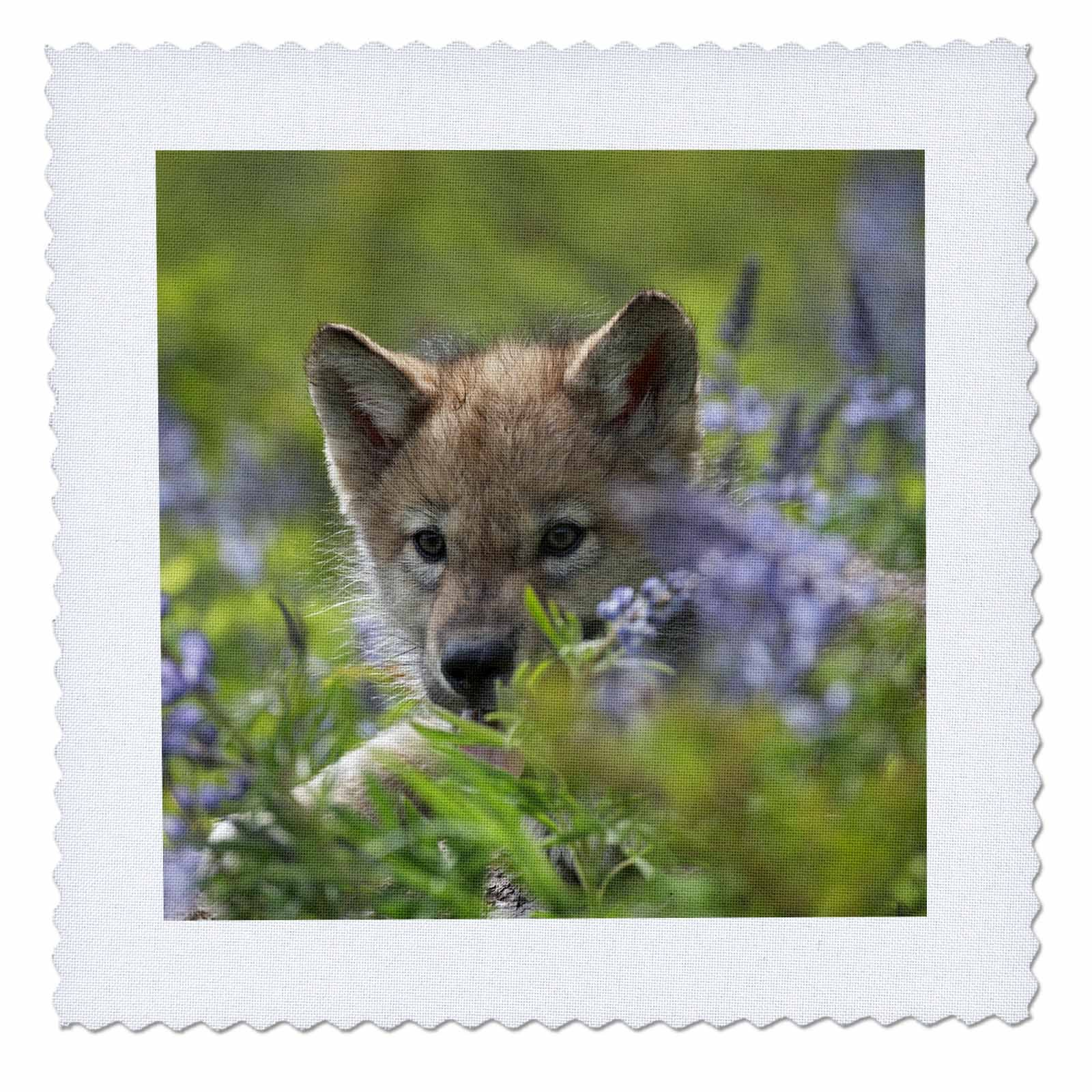 3dRose Danita Delimont - Baby Animals - Gray wolf pup, Canis lupus, hidden in flowers, Montana - 18x18 inch quilt square (qs_259635_7)