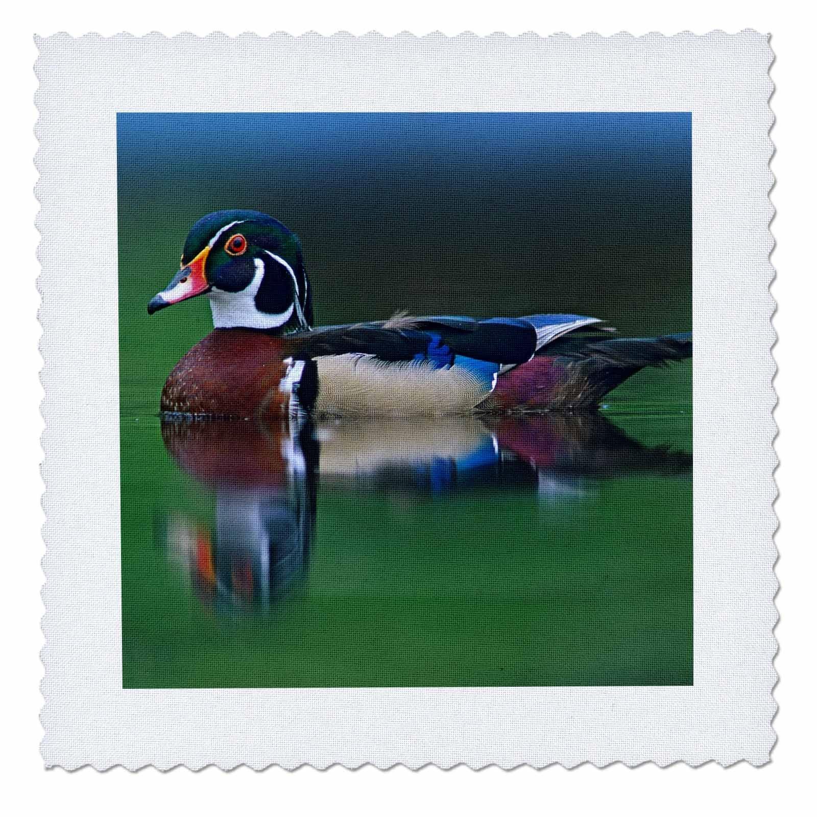 3dRose Danita Delimont - Ducks - Male wood duck, Aix sponsa, swimming, Canada - 22x22 inch quilt square (qs_258088_9)