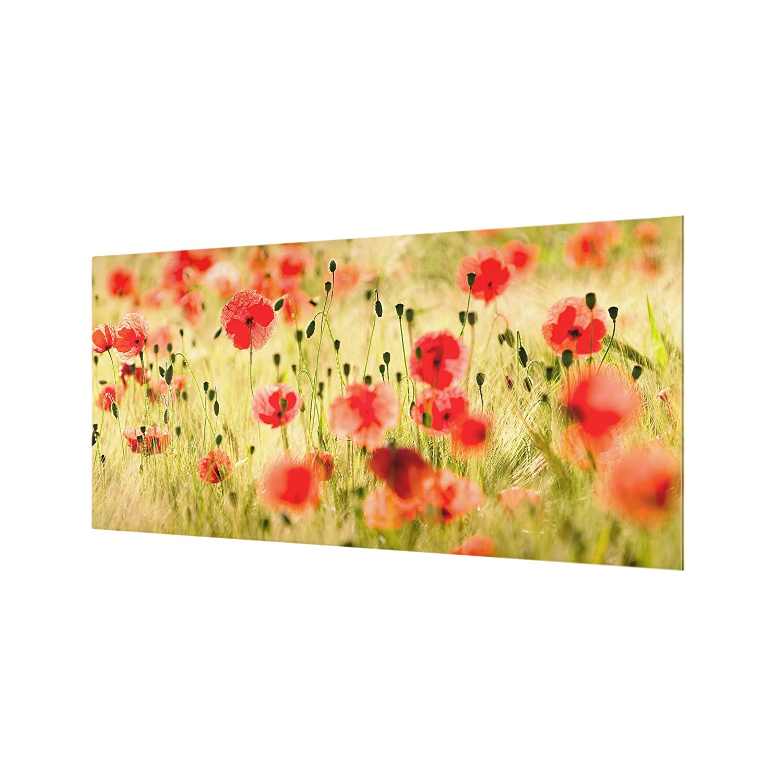 HxB: 40cm x 80cm Bilderwelten Spritzschutz Glas Quer 1:2 Summer Poppies