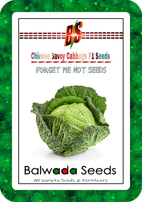 Buy Chinese Savoy Cabbage F1 Seeds Hybrid Variety High Quality Selected 50 Seeds Packet Online At Low Prices In India Amazon In