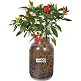 Back to the Roots 25206 Organic Chilli Peppers Year-Round Indoor Herb Garden Grow Kit Includes Vegetable Seeds Variety Pack f