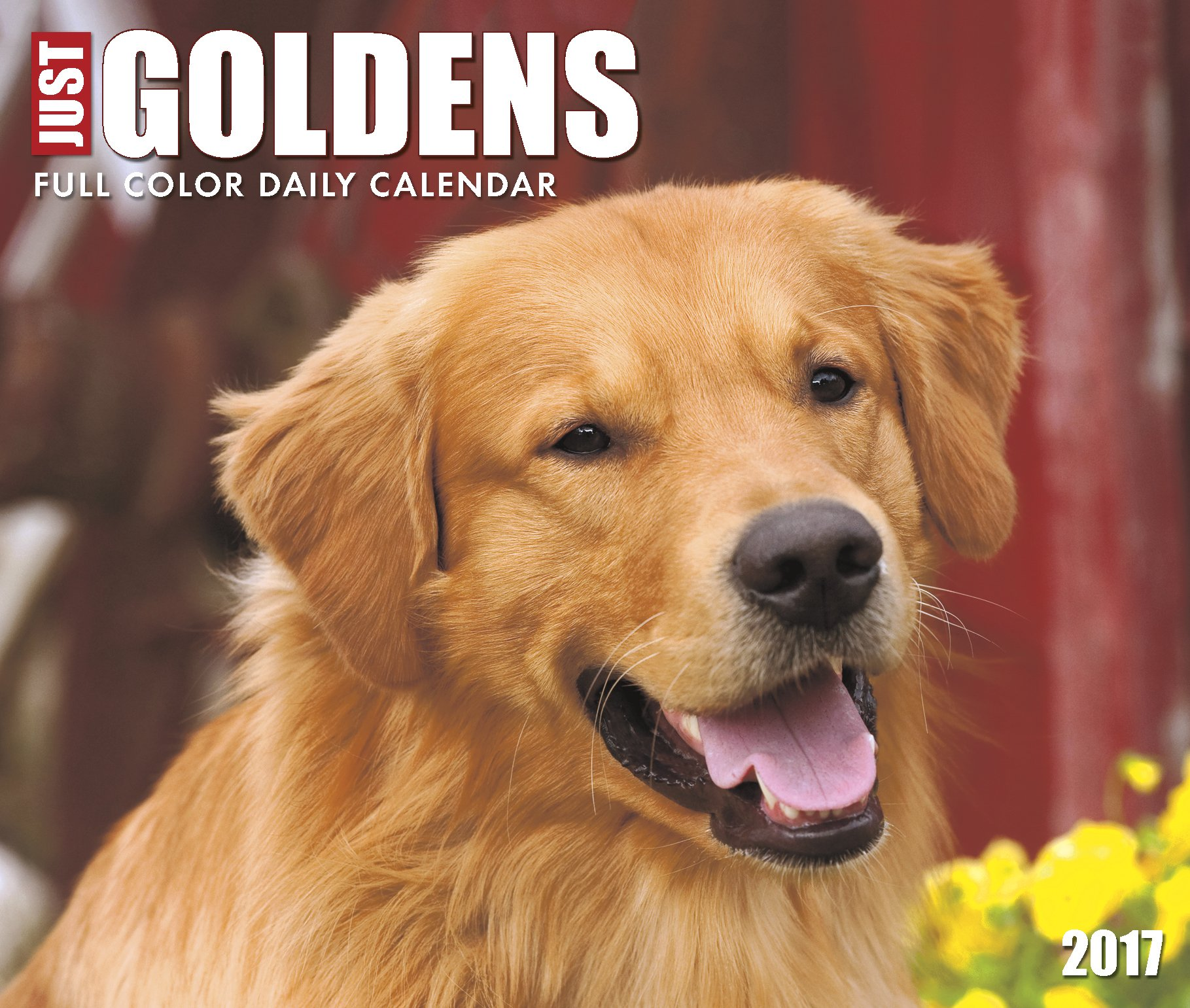 Amazon.com: Just Goldens 2017 Box Calendar (Dog Breed Calendars ...