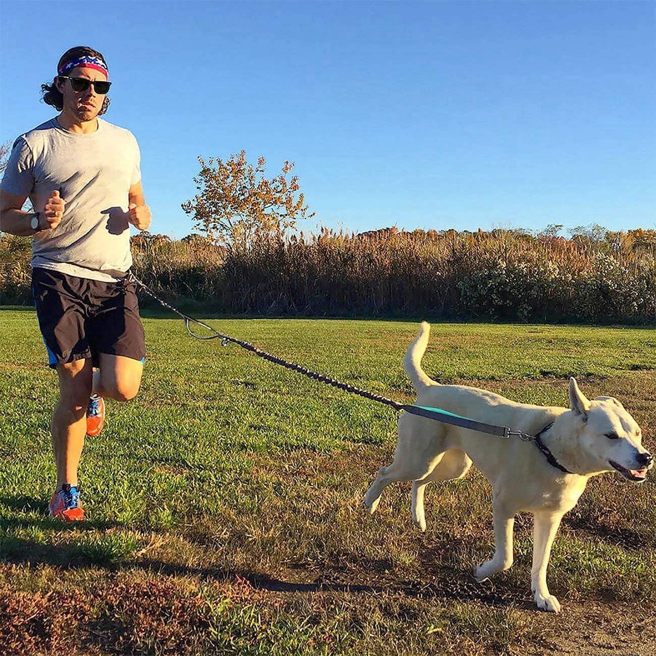 per Correre,Fare Jogging O Camminare Controllo Libero per Cani Fino A 150 Libbre Guinzaglio Elastico Doppio Manico con Cinturino Regolabile Petmo Cani Guinzaglio con Doppio Elastico