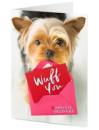 U0027Wuff Youu0027, Motiv Yorkshire Terrier, Welpe Mit Nachricht Allgemeinen  Special Delivery,