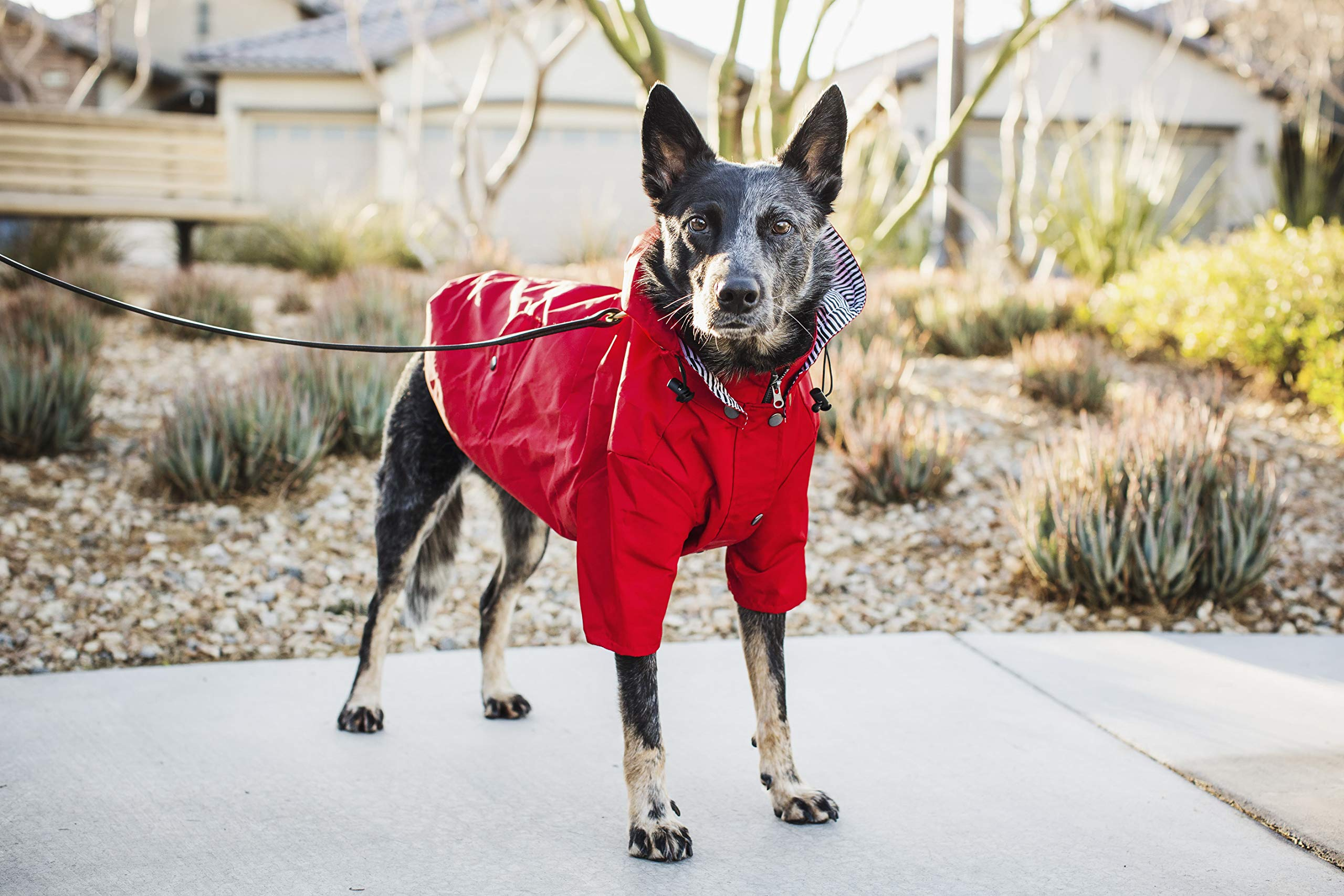 Ellie Dog Wear Red Zip Up Dog Raincoat with Reflective Buttons, Pockets, Rain/Water Resistant, Adjustable Drawstring, Removable Hoodie - Size XS to XXL Available - Stylish Premium Dog Raincoats (M) by Ellie Dog Wear (Image #5)