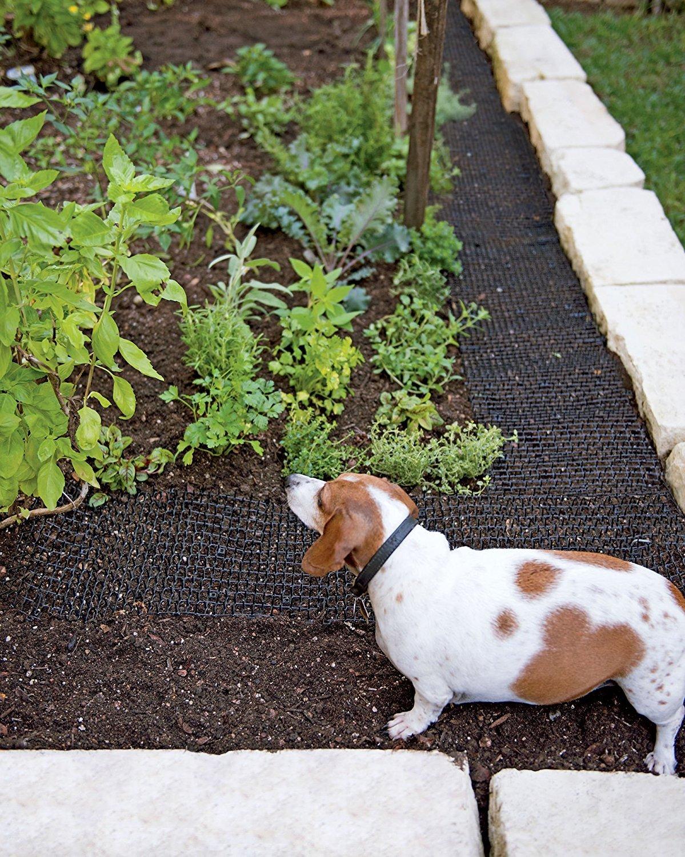 PestExpel® Repelente Repelente Repelente de Espinas de Estera de Animal de Perro Anti Gato 2m x 0.3m: Amazon.es: Jardín