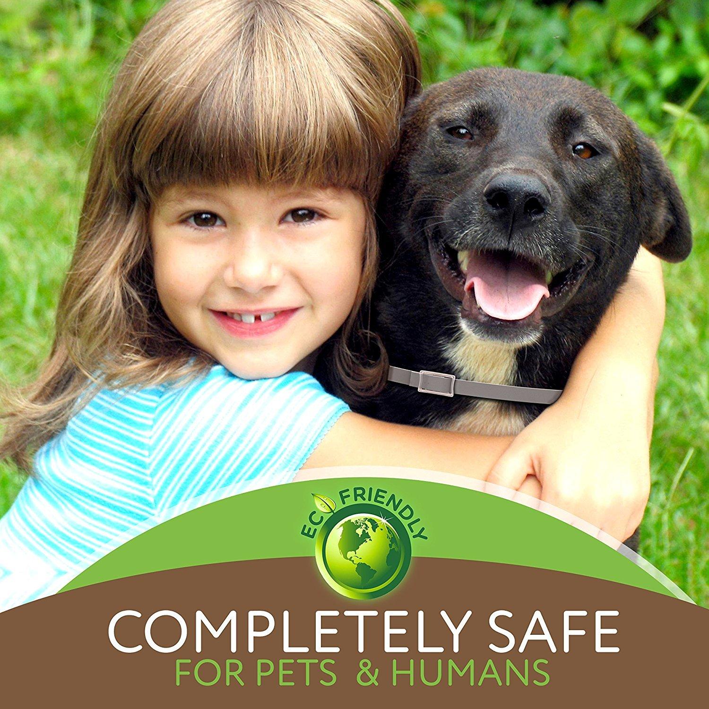 MOORAY Dog Flea Collar Natural Ingredients - Adjustable & Waterproof Dog Flea Collar 8 Month Protection