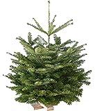 Echter Weihnachtsbaum Nordmanntanne H=ca. 1,65-1,80 m Premium frisch geschlagen