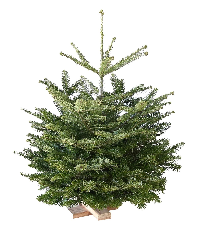 Echter Weihnachtsbaum Nordmanntanne H=ca. 0,80-0,95 m Premium frisch ...