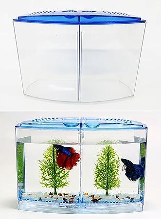 takestop Acuario de plástico bettiera Doble Aislamiento Crecimiento allevamento para Peces combattenti Incubadora nacedora
