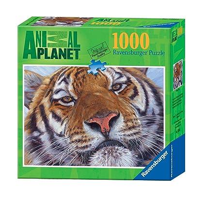 Amazon.com: Ravensburger Animal Planet: Tigre de Bengala ...