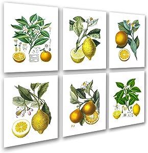Kitchen Art Decor Set of 6 Unframed Art Lemon Orange Fruit Vintage Botanical Wall Decor by Gnosis Picture Archive Citrus_6A