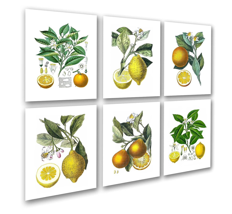 Küche Art Decor Set von 6 ungerahmt Zitrone Orange Obst Vintage Botanical Reproduktion Art Prints