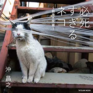 必死すぎるネコ ~前後不覚 篇~