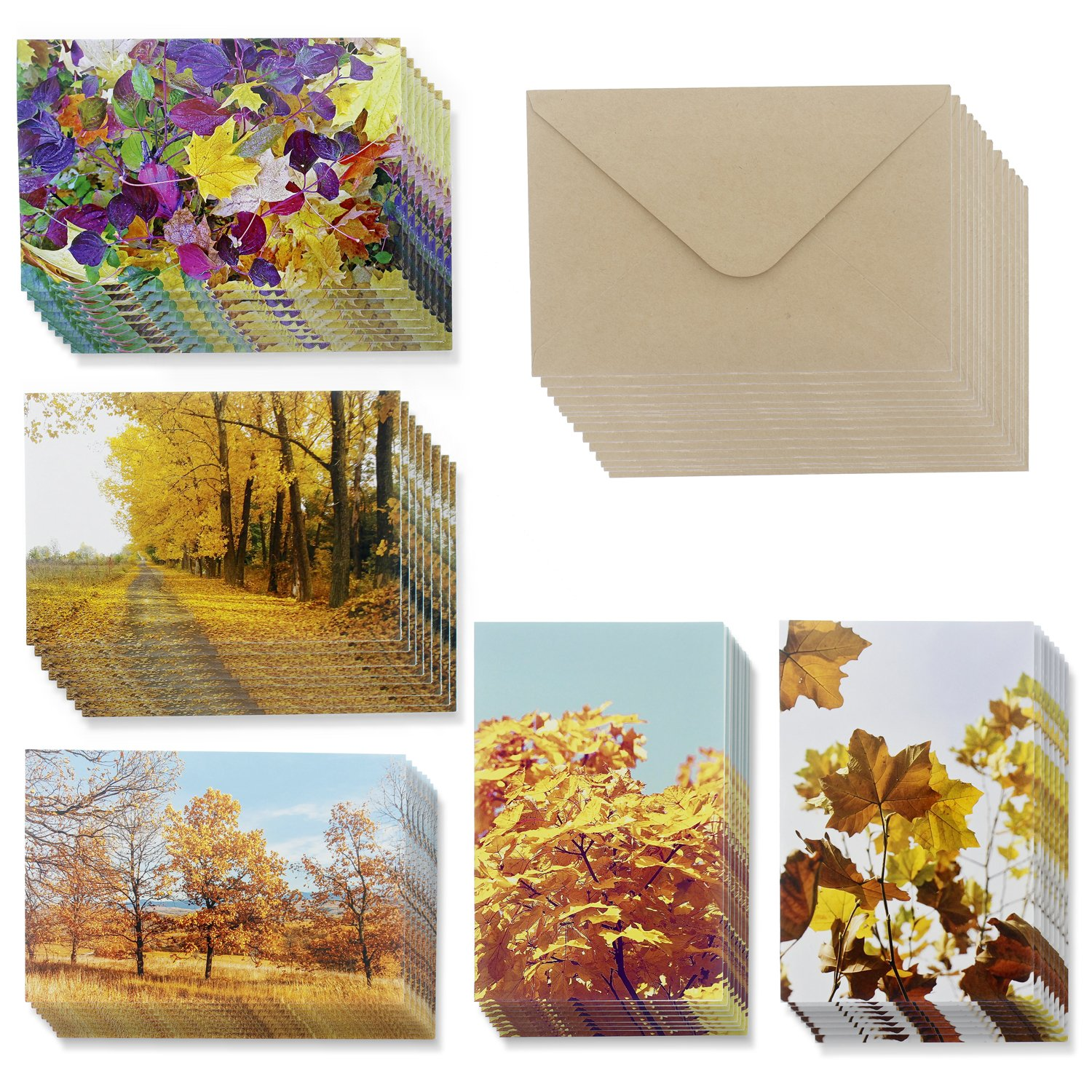 Amazon majestic scenery 36 note cards 6 designs blank 48 pack all occasion assorted blank note cards greeting card bulk box set 6 fall kristyandbryce Image collections