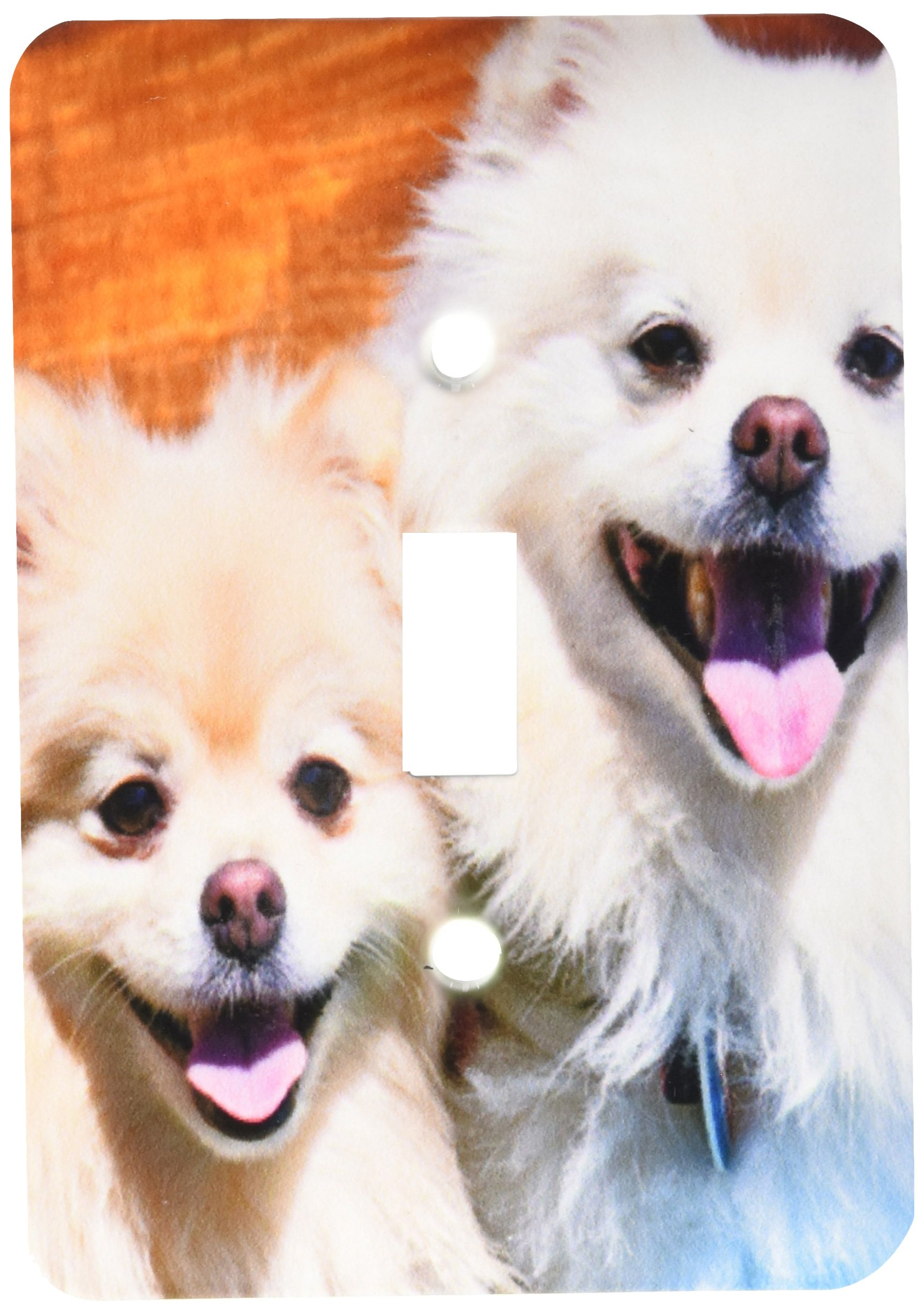 3dRose lsp_192383_1 Usa, California Two Pomeranians Sitting on a Wooden Bench Light Switch Cover
