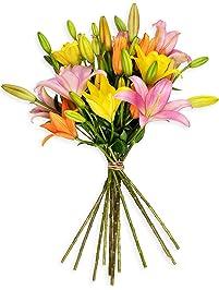 Benchmark Bouquets 12 Stem Assorted Asiatic Lilies, No Vase (Fresh Cut Flowers)