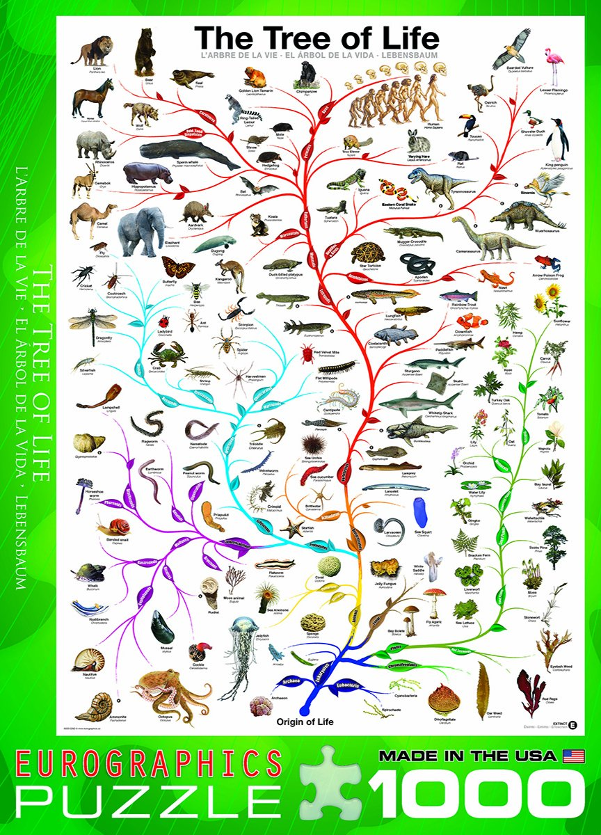 amazon com eurographics evolution the tree of life 1000 piece